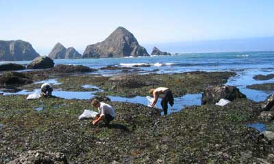 harvesting seaweed off the Mendocino Coast